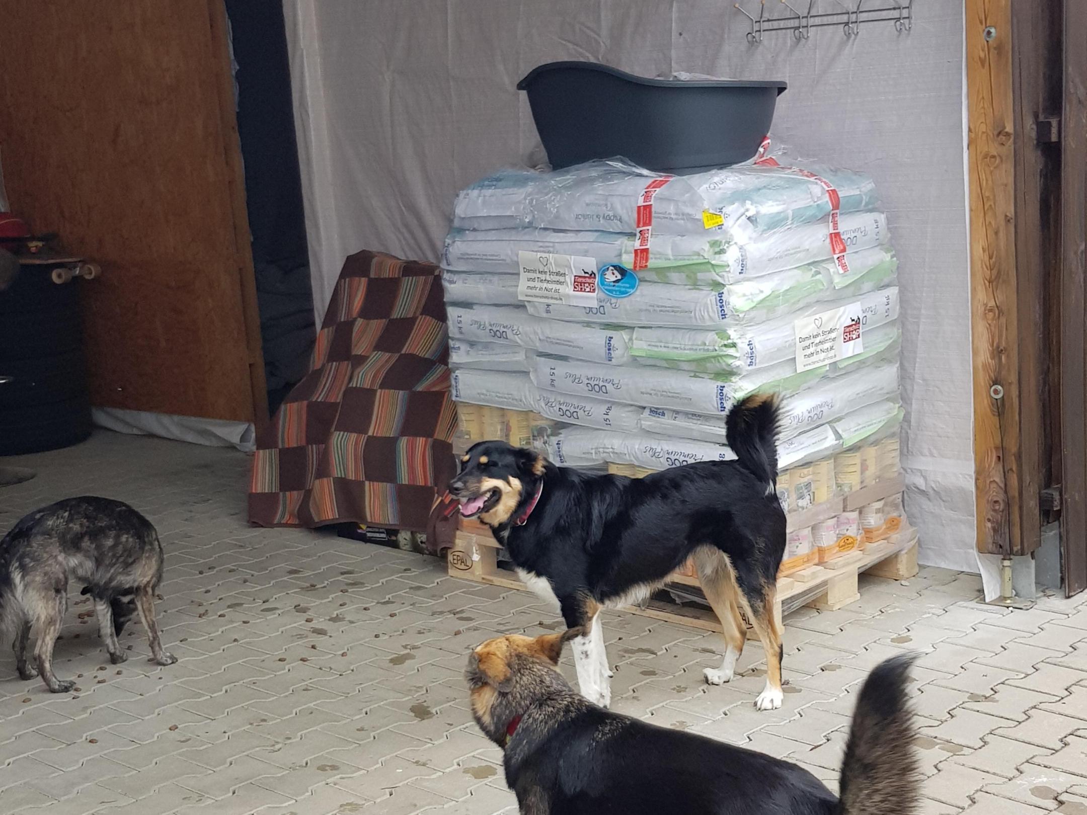 Strassenhunde Rumänien in Not eV_WL_RU (8)