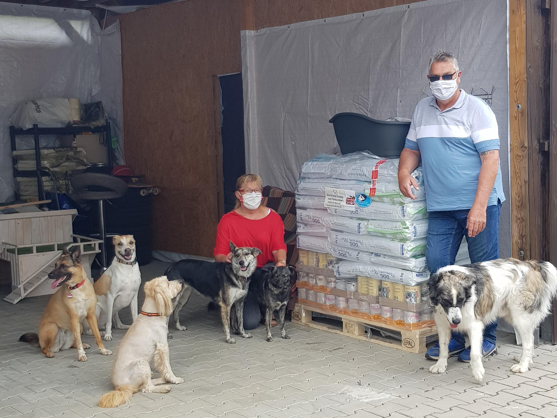 Strassenhunde Rumänien in Not_WL_Rumänien (1)