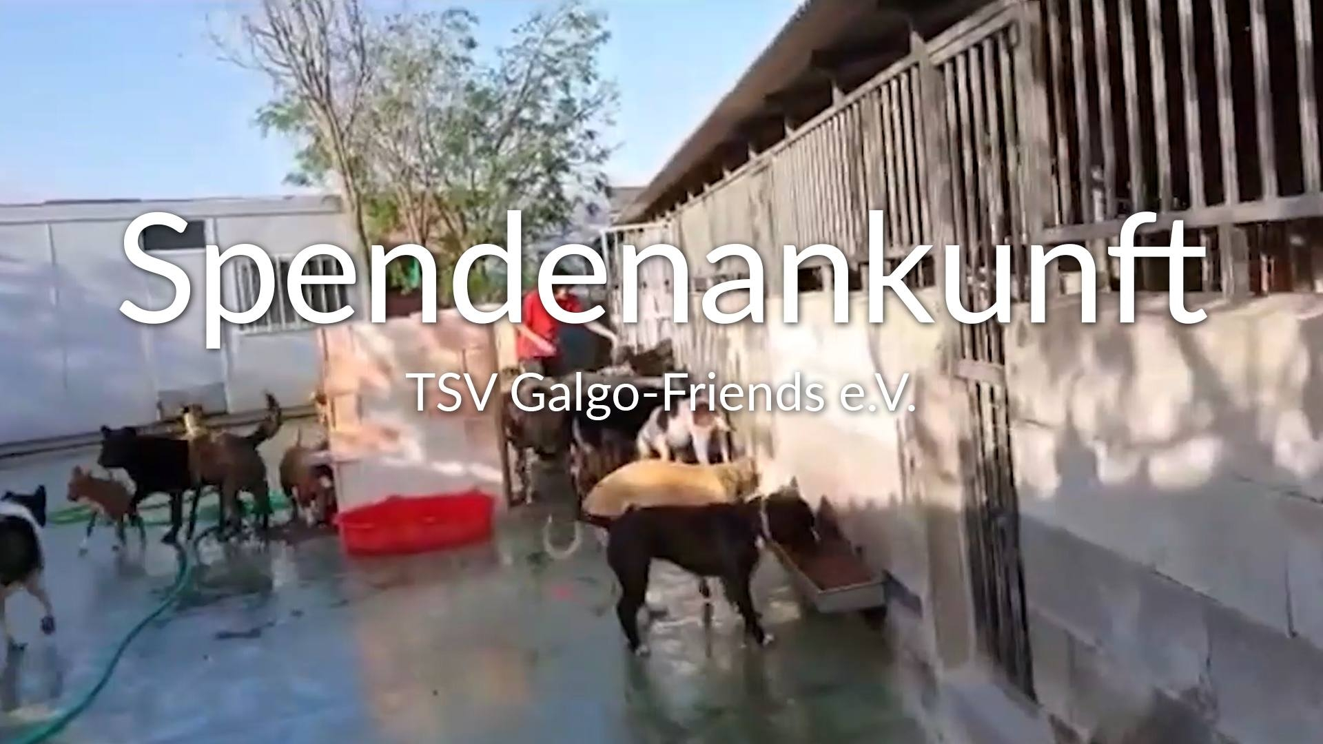 TSV Galgo-Friends eV_Galgo Aktion_Spanien