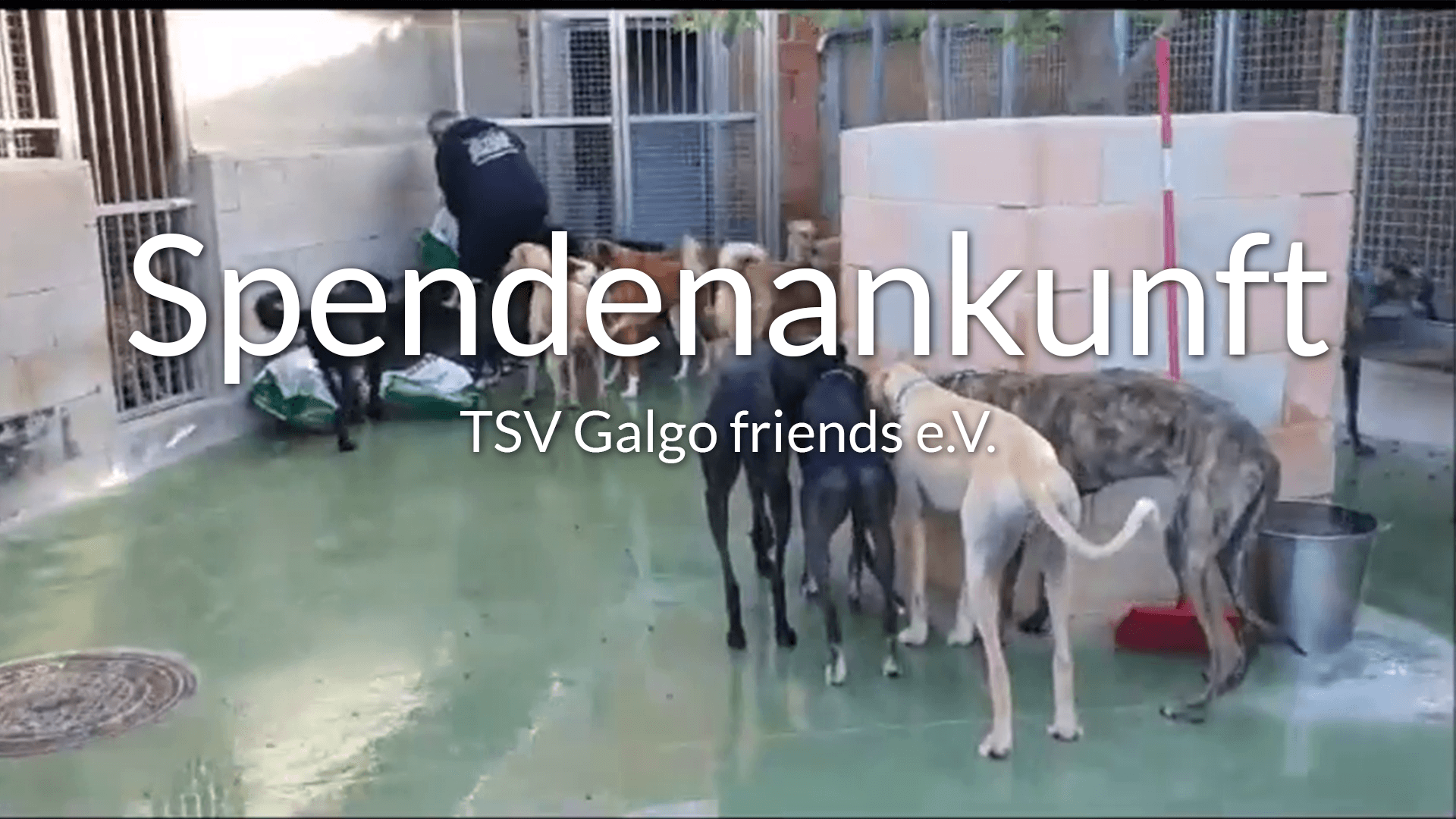 TSV-Galgo-friends-Galgo-Aktion-Thumbnail