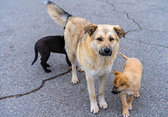 Ein Hund mit zwei Welpen auf Straße