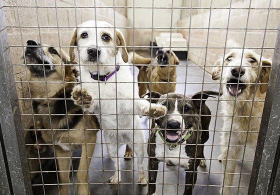 Aufgeregte Tierheimhunde im Käfig.