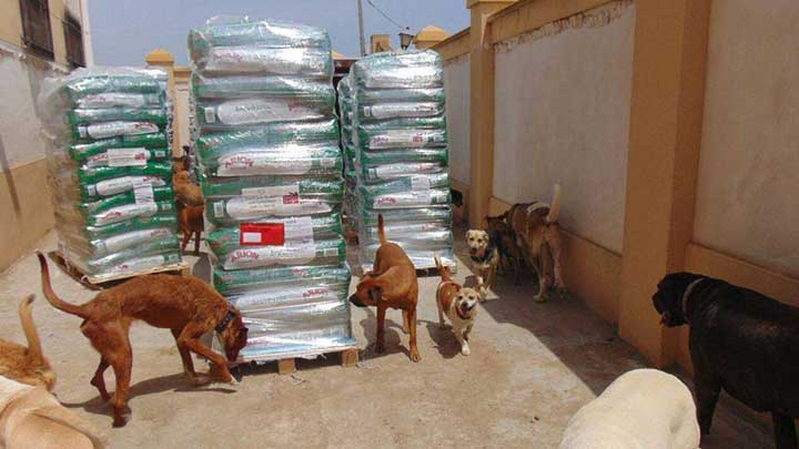 Hunde beschnuppern Futtersäcke auf Paletten
