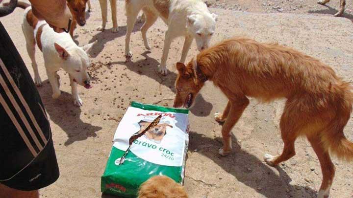 Hunde beschnuppern offenen Futtersack am Boden
