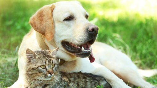 Hund und Katze liegen gemeinsam auf einer Wiese