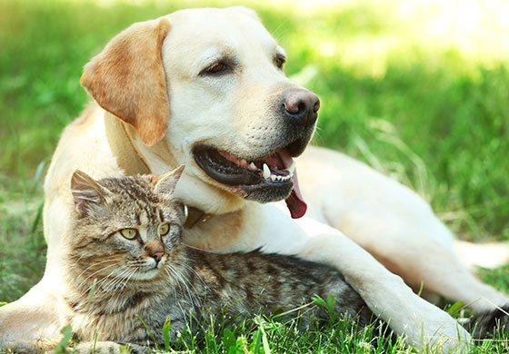 Katze und Hund liegen auf einer Wiese.