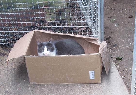 Ausgesetzte Katze in Karton