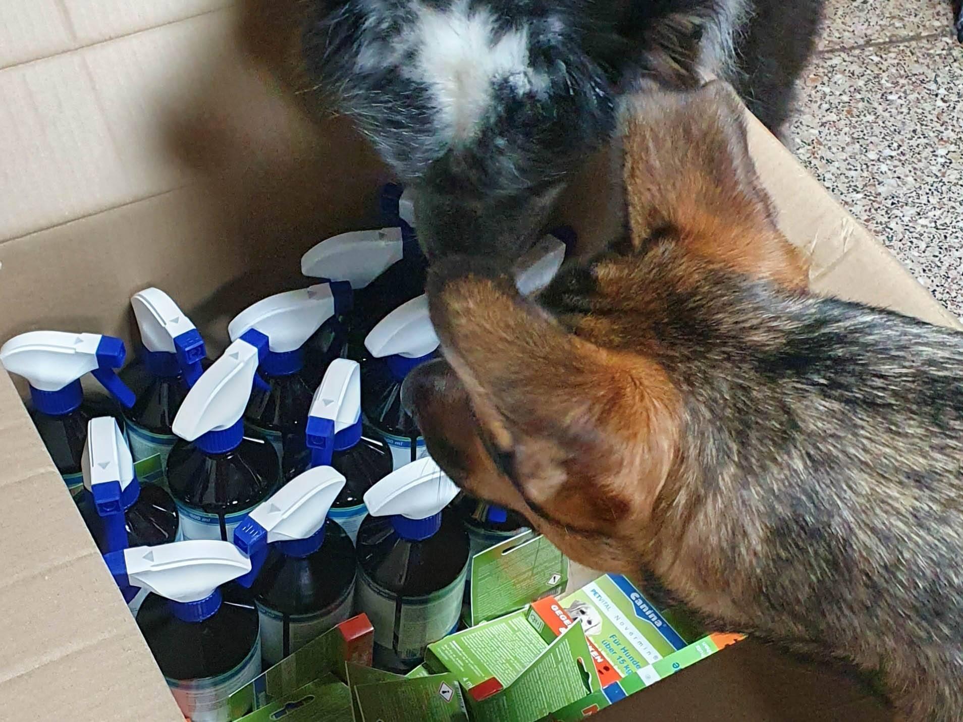 """Free Dogs"" Vergessene Tiere in Not eV_Desi_Spoton_Rumänien (2)"