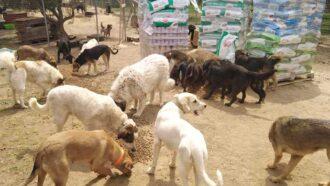 Hunderudel frisst Futter vom Boden
