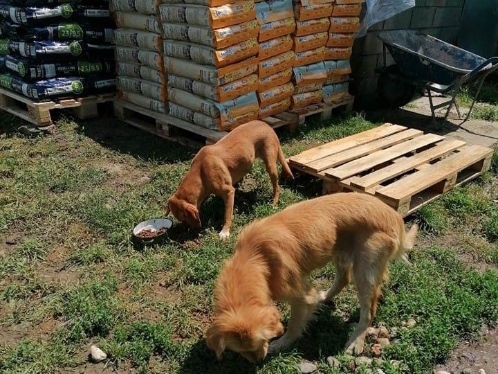 Tierhilfe-KowaNeu eV_Corona_Serbien (2)