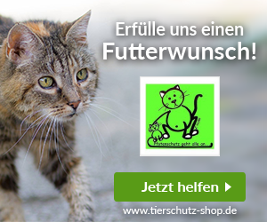 Katzenhilfe e.V.: Pfotenschutz Bulgarien