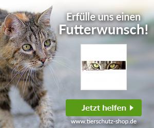 Katzenhilfe Katzenherzen e.V.