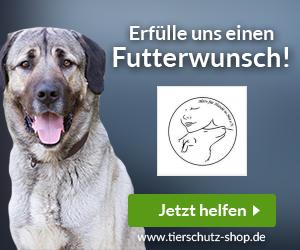 Aktiv für Hunde in Not e.V.
